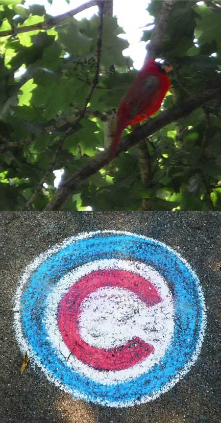 Cubs logo,cardinal