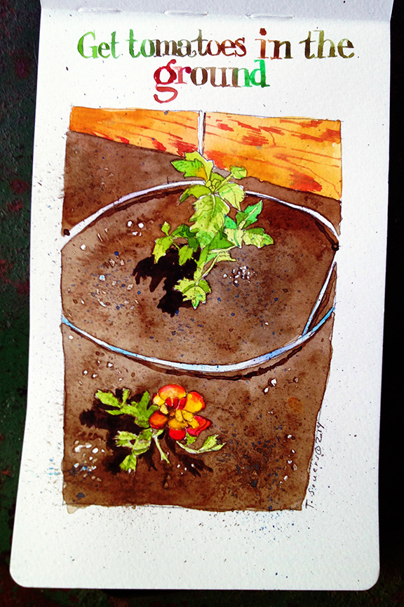 Tomato plant watercolor