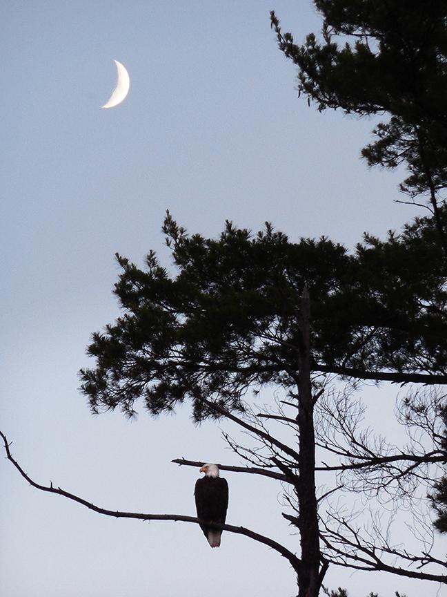 Eagle.Moon