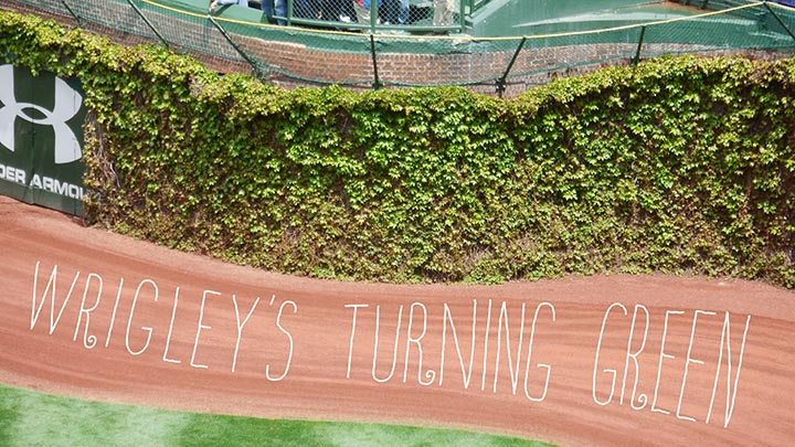 Wrigley Field Turning Green