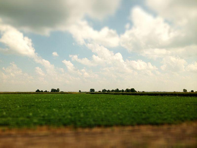 T farm crops out my train window