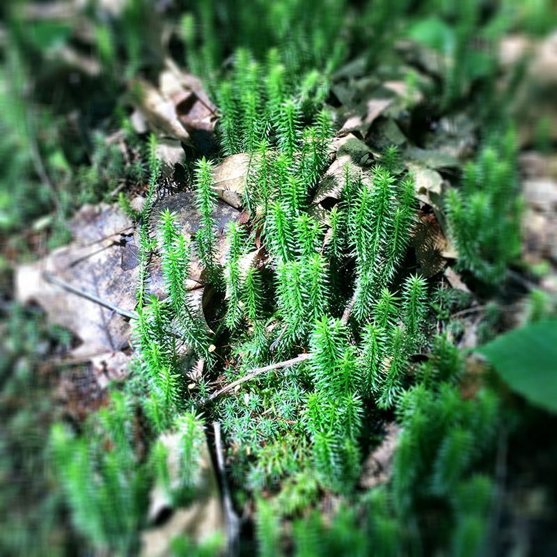 Miniature-forest