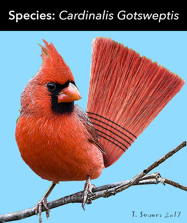 New-Species-of-Cardinal