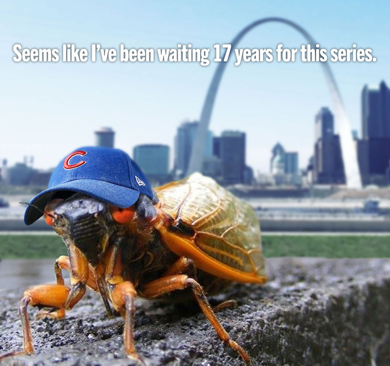Cicada-waiting.Insta2