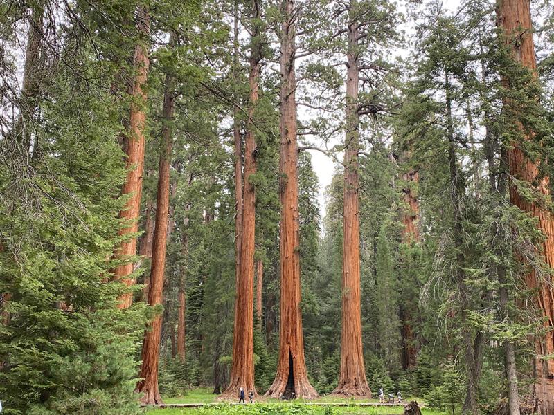 Giant-Trees